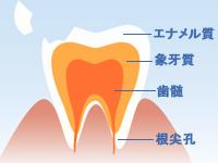 歯の疾患は万病の元